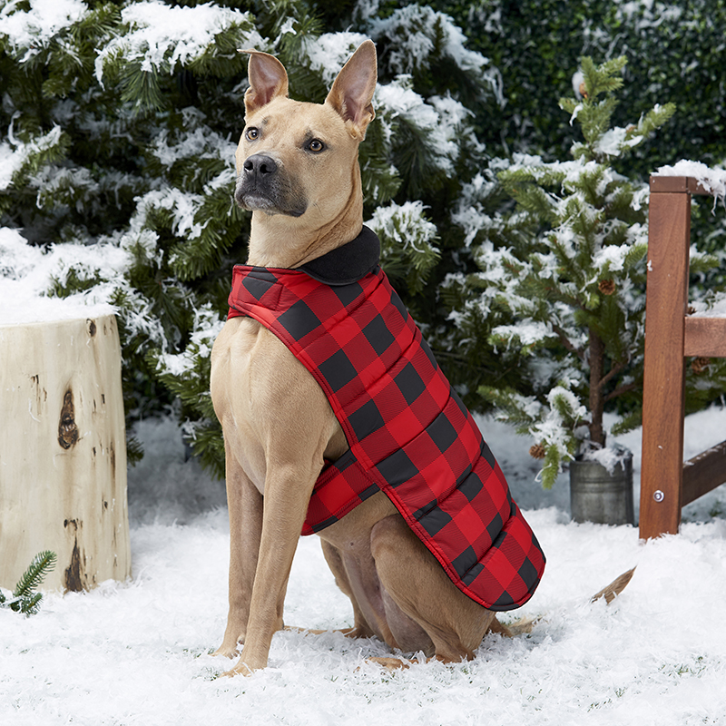 Increase the Bonding Strength of Your Dog Using the Clothes and Treats